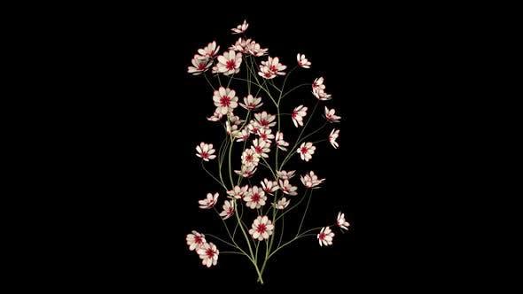 Thumbnail for Susans Flower
