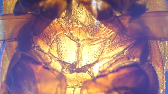 Thumbnail for Insect Analysis