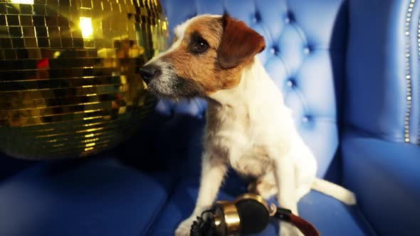 Thumbnail for dog disco puppy animal pet funny party music doggy