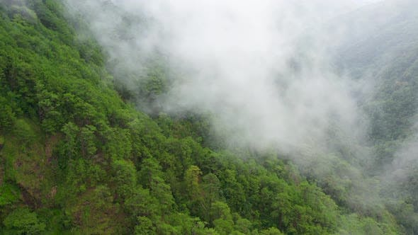 Mountain Peaks Are Covered with Rainforest and Clouds. Rain Clouds in a Tropical Climate