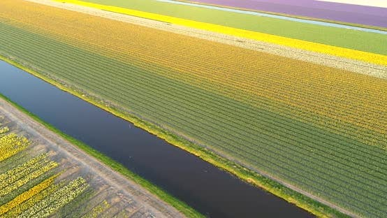 Thumbnail for Aerial view of The Garden of Europe at Keukenhof botanical garden, Netherlands.