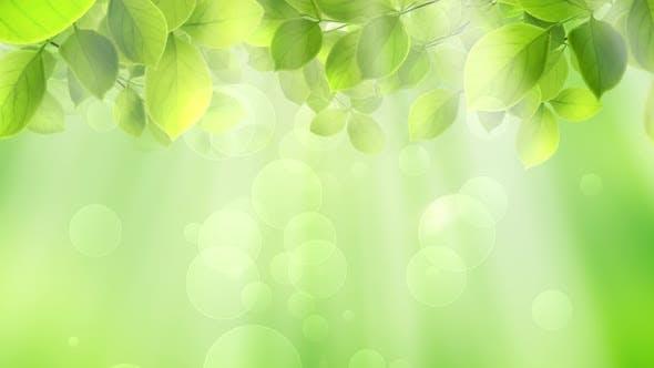 Thumbnail for Spring Sun Shine