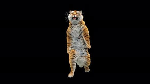 Thumbnail for Tiger 4K