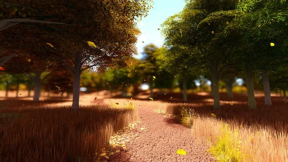 Thumbnail for A Path Through Colorful Orange Trees In Autumn