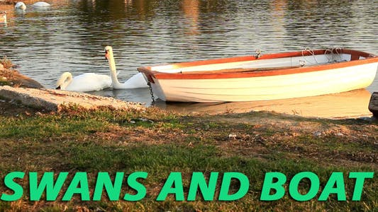 Thumbnail for Swans And Boat