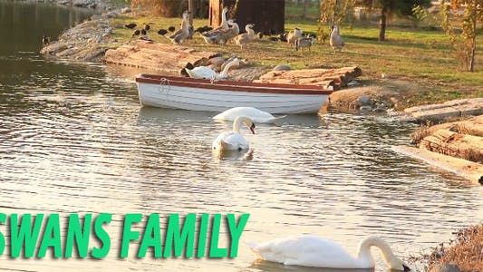 Cover Image for Swan Family
