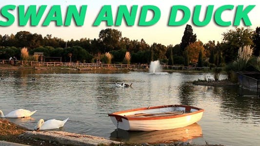 Thumbnail for Swan And Duck