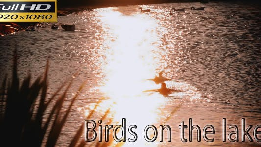 Thumbnail for Birds On The Lake - Nature Full HD