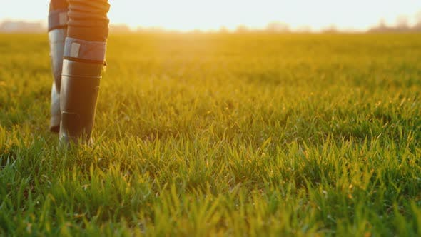 Cover Image for Rear View of Farmer in Rubber Boots Walks Across a Green Field, Only Legs Are Visible in the Frame