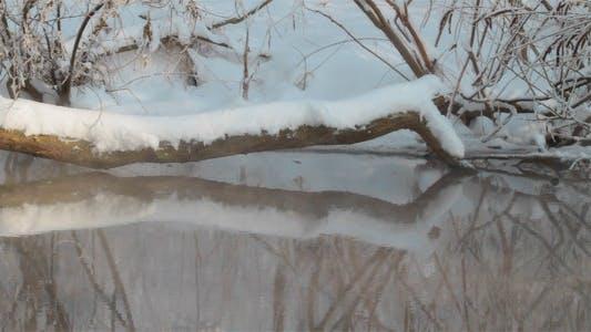Thumbnail for Little Stream In Winter Forest 1