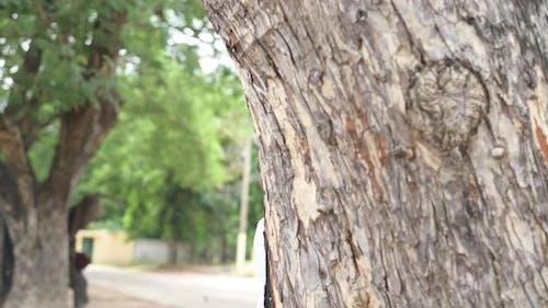 Ein Junge schaut um einen Baumstamm, Versteckspiel
