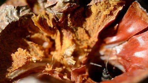 Bug Crawling in a Nut 2