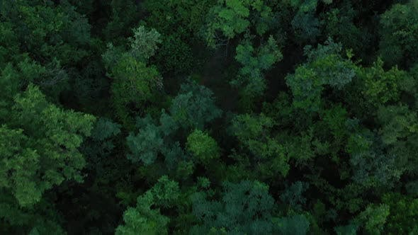 Thumbnail for Africa Mali Forest Top View