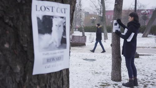 Focus Changes From Young Caucasian Woman Hanging Missing Pet Ad on the Tree at the Background To One