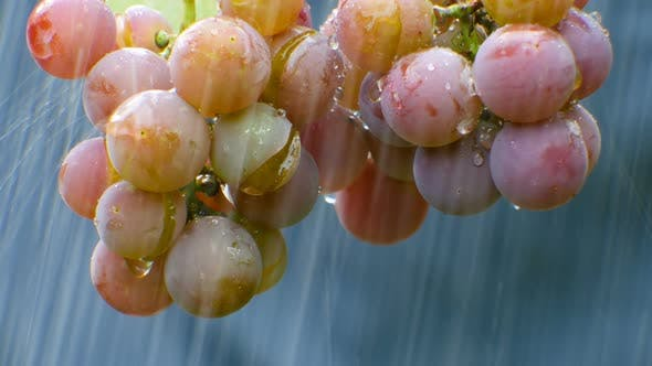 Thumbnail for A Bunch of Grapes in The Rain