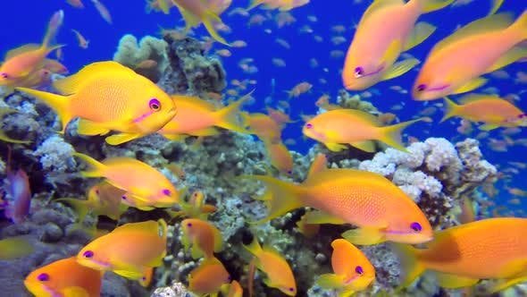 Thumbnail for Beautiful Underwater Colorful Fishes