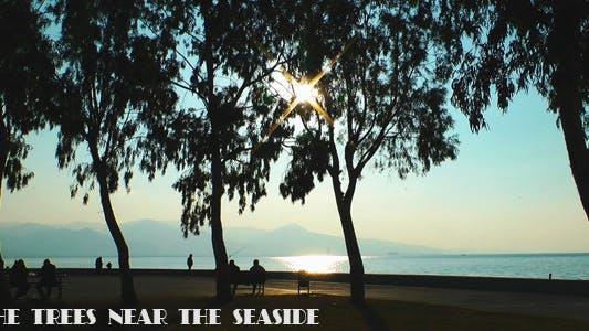 Thumbnail for Trees Near the Seaside