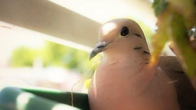 Bird On A Balcony