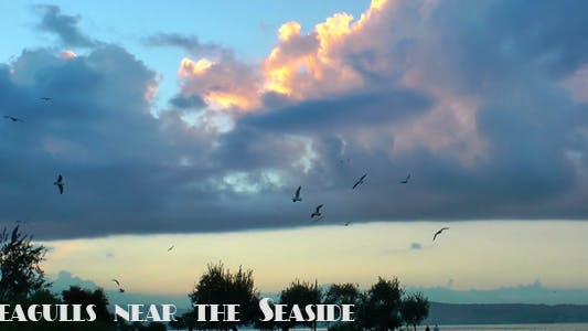 Thumbnail for Seagulls Near the Seaside