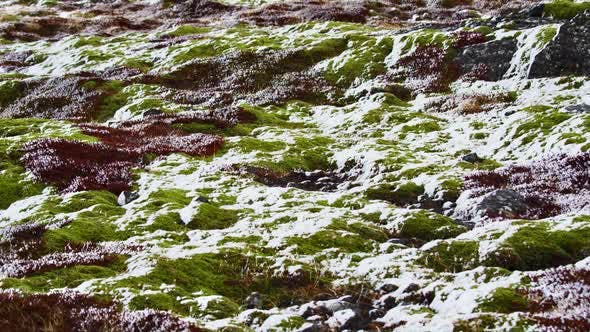 Thumbnail for View of Mountain Field Covered Snow in Iceland