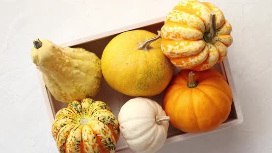Thumbnail for Different Pumpkins Laid in Box
