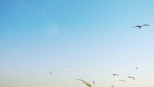 Thumbnail for Bird Animal Seagulls Flying on Bright Blue Sky