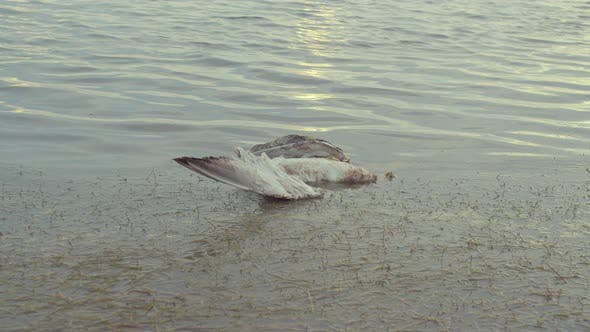 Cover Image for Dead Seagull on the Shore of a Sea