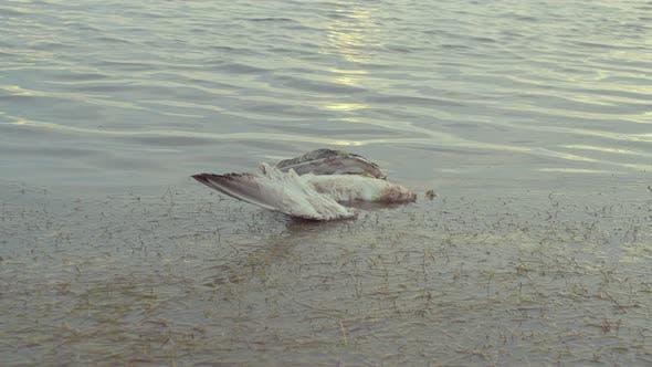 Dead Seagull on the Shore of a Sea