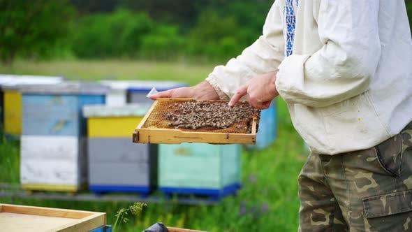 Thumbnail for Beekeeping examination in summer