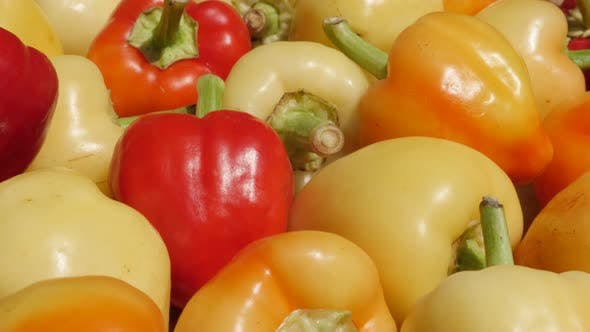 Thumbnail for Picked organic bell peppers Capsicum annuum 4K footage