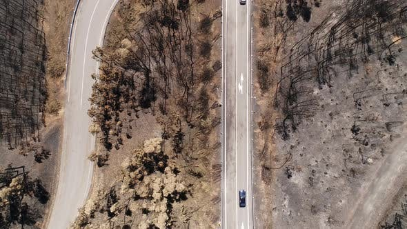 Aerial Road Pine Forest Black HIlls Burned Dead Trees Brown Needles Fire Post-fire Scorched