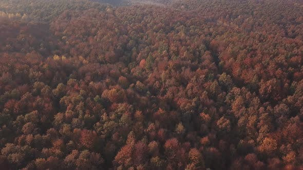 Cover Image for Autumn Forest Aerial View