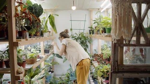 Floristen Sprühen Pflanzen in Töpfen auf Holzregalen