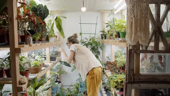 Female Florist Spraying Plants in Pots on Wooden Shelves