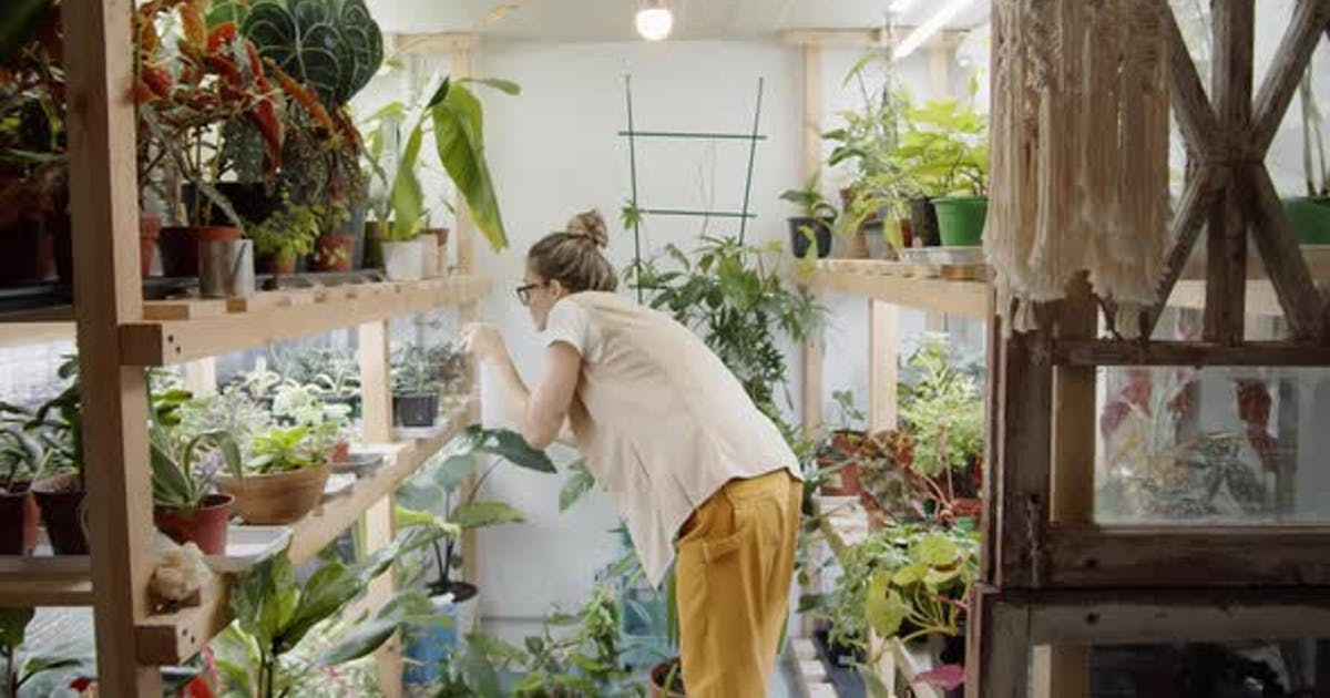 Female Florist Spraying Plants in Pots on Wooden Shelves