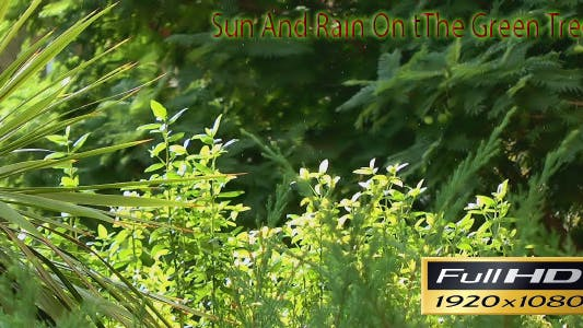 Thumbnail for Rain And Sun On The Trees FULL HD