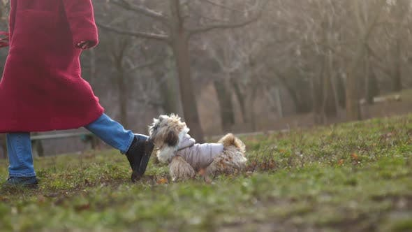 Thumbnail for Dog in Grey Jacket Runs To Owner Holding Small Tree Brunch
