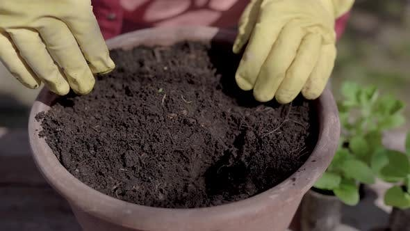 Thumbnail for Close-up. The Process of Planting Plant Pots in Pots. Green Seedlings Are Planted in the Prepared