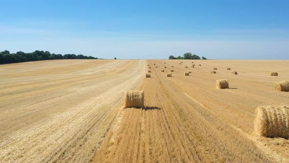Thumbnail for Round Hay Bales At The Field