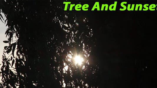Thumbnail for Tree and Sunset