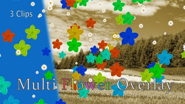 Thumbnail for Multi Flower Overlay