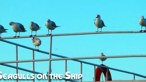 Seagulls on the Ship