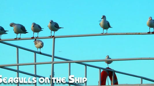 Thumbnail for Seagulls on the Ship