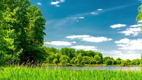 Calm lake in green city park.