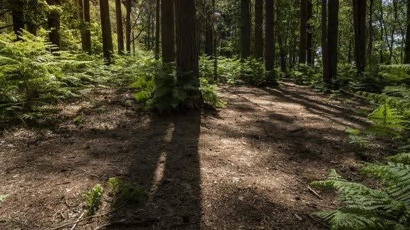 Thumbnail for Time lapse of shadows moving through a forest