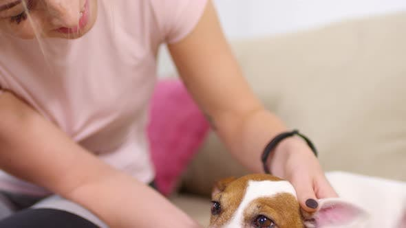 Thumbnail for Female Owner Petting Adorable Dog on Sofa