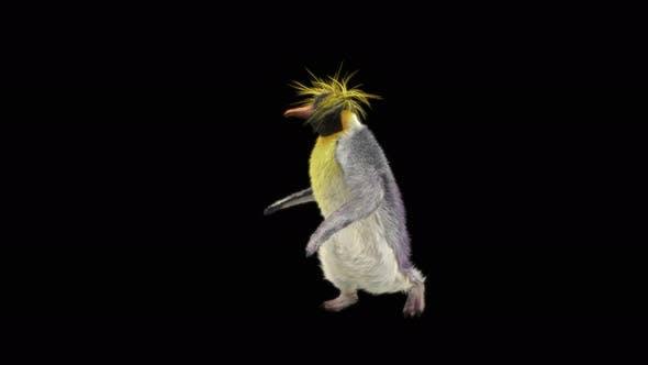 Thumbnail for Penguin Dancing 4K