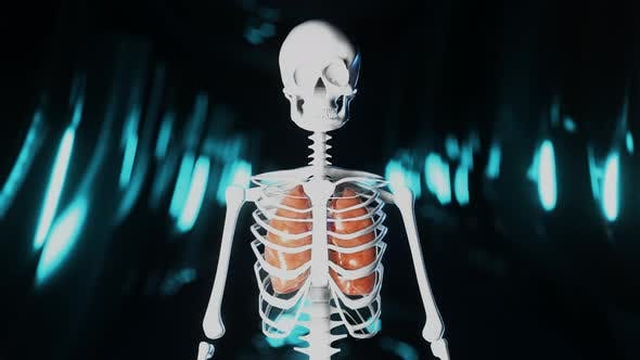 Thumbnail for Heart Pumbing Blood in a Skeleton Representation