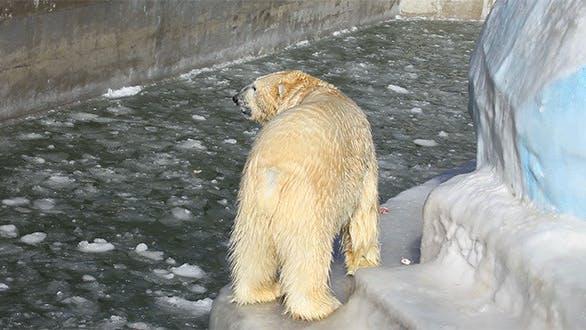 Thumbnail for Polar Lunchtime