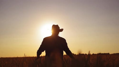 Silhouette of a man in field at sunset